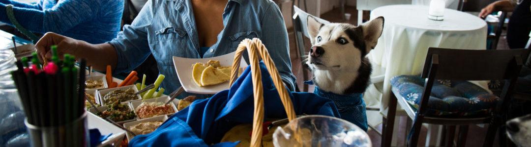 7 Pet Friendly Restaurants and Bars in LA