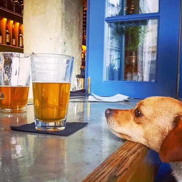 dog-friendly-bar-los-angeles